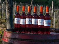 Újra itt vannak a rókaszínű borok