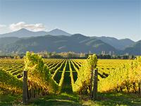 360 ezer liter bor folyt egy folyóba Kalifornia államban