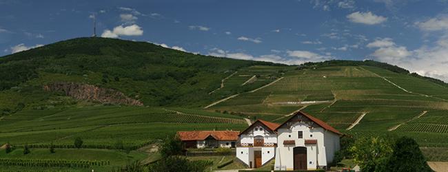 Tokaj-Hétszőlő Szőlőbirtok